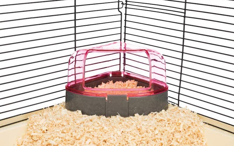 can you potty train a hamster