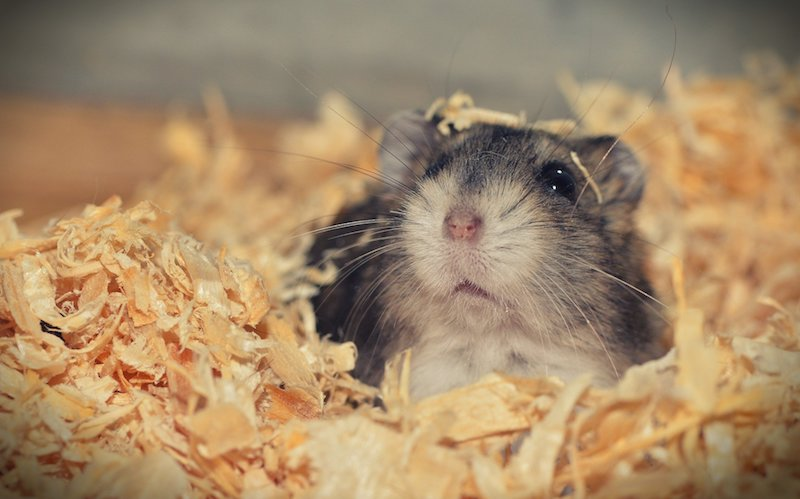 how to keep your hamster happy