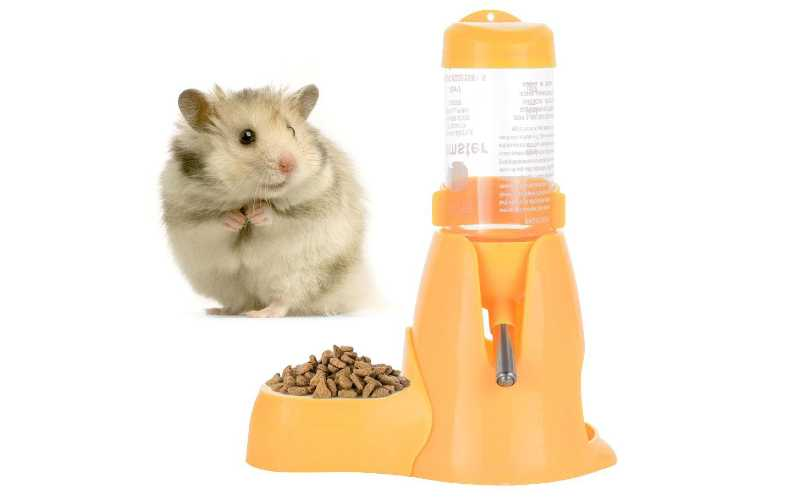Can hamsters drink from a bowl