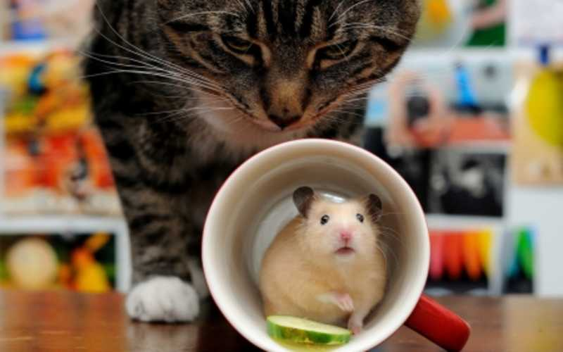 Hamster and Cat