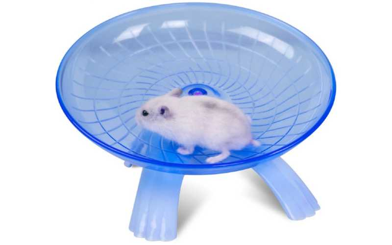 How Much Exercise Does A Hamster Need