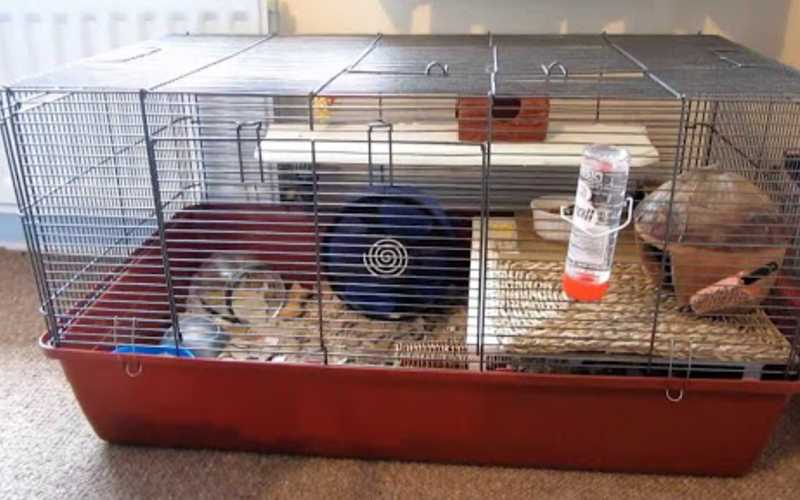 5 Things you need for a Hamster