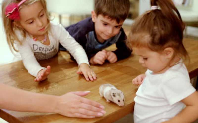 Best Hamster for Kids