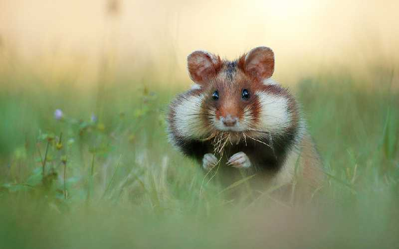 How to Find an Escaped Hamster
