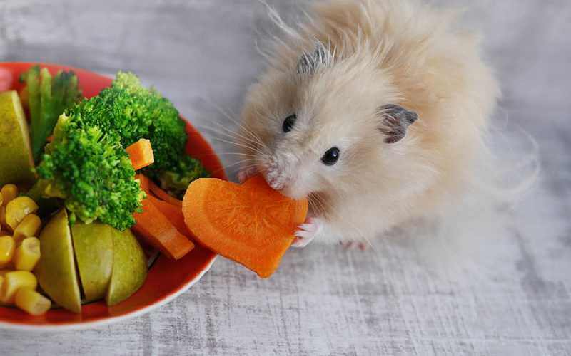 Fresh Food for Hamsters